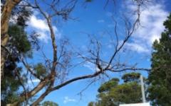 艾迪国际秋季教育展-移民加分新贵地区——塔斯马尼亚大学健康学院